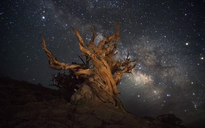 The Night Sky in the Eastern Sierra