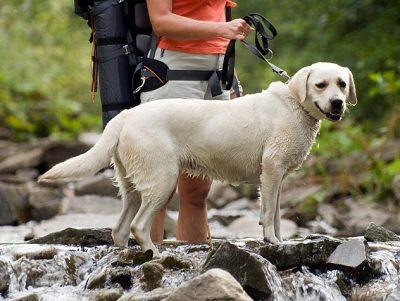 photo of leashed dog hiking with backpacker