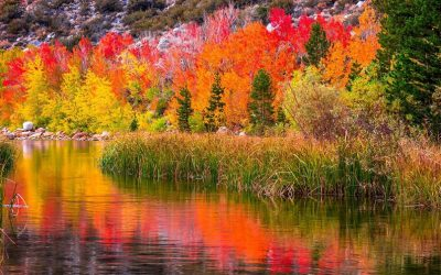 Guide to Fall Color Spotting from Behind the Lens
