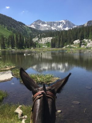 Image of a Sierra lake through the ears of a mule being ridden