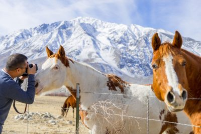 image of curious horses with a photographer