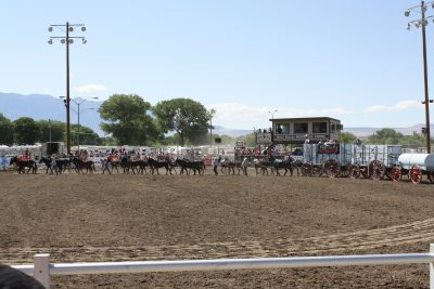 image of the 20 Mule Team in the arena at Bishop Mule Days