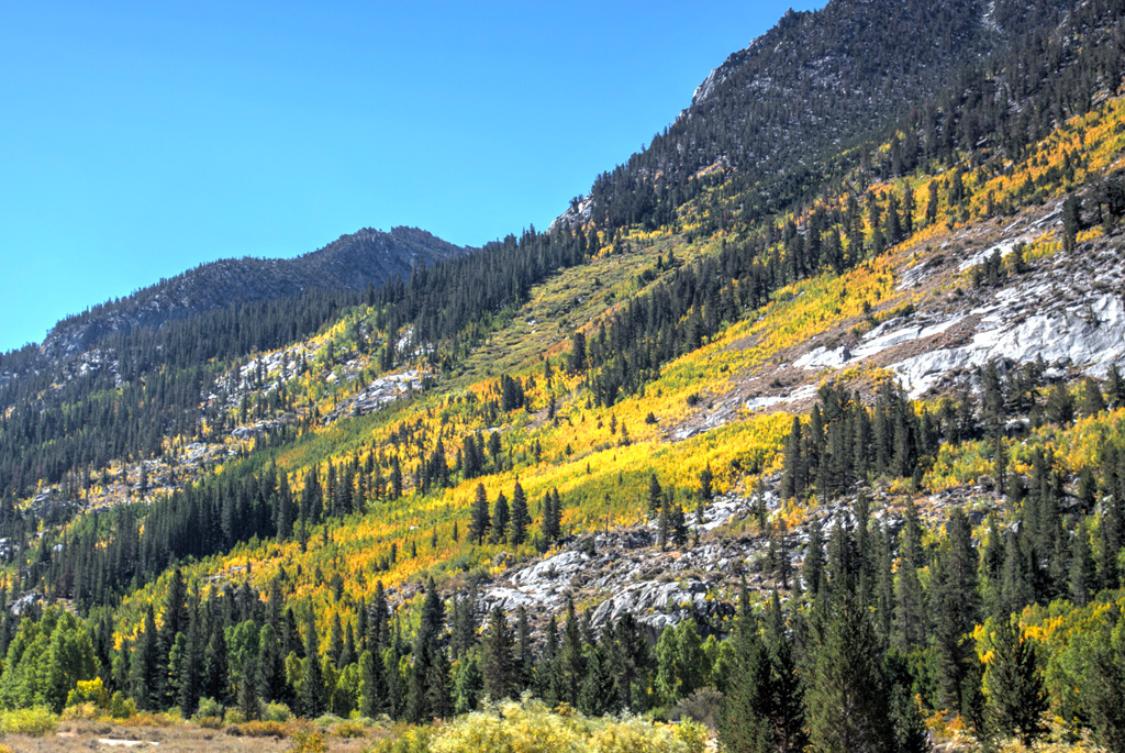 image of fall color on hillside