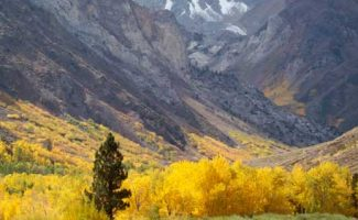 image of fall color in McGee Creek Canyon