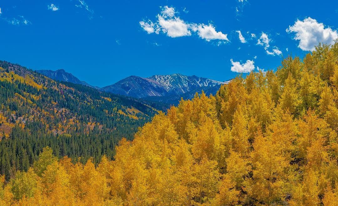 image of fall color and mountains