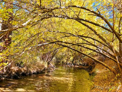 Lower Rock Creek is iridescent in fall.