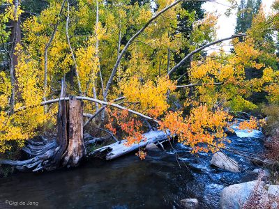 Overhanging branch Bishop Creek near Parchers.