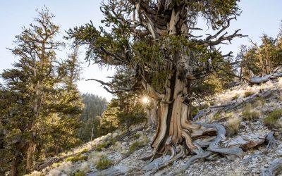 The 7 Wonders of the High Sierra