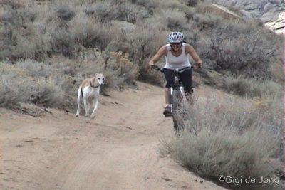 mountain biking. dog. buttermilks. bishop