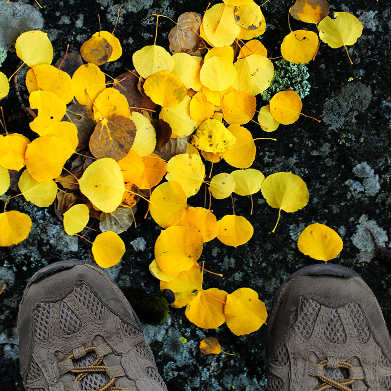 Close up of aspen leaves on dark rock with hiking boots