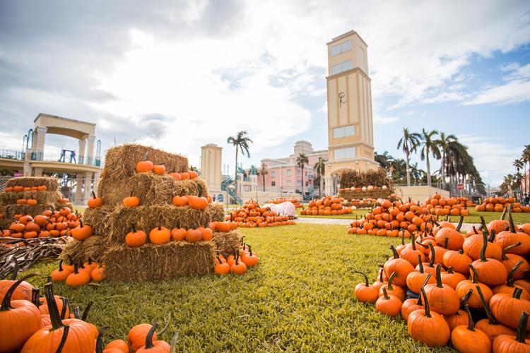 Boca Pumpkin Patch Fest