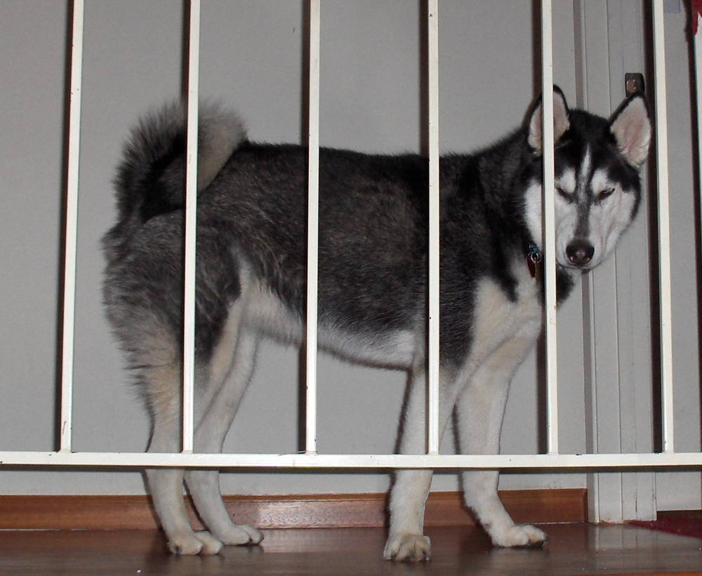 Sophie says: -Why am I in jail???