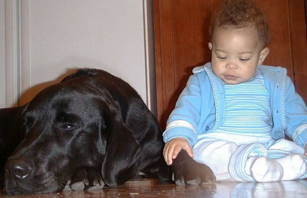 Hank babysitting