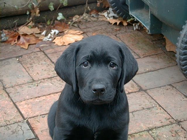 Hank's puppy mugshot