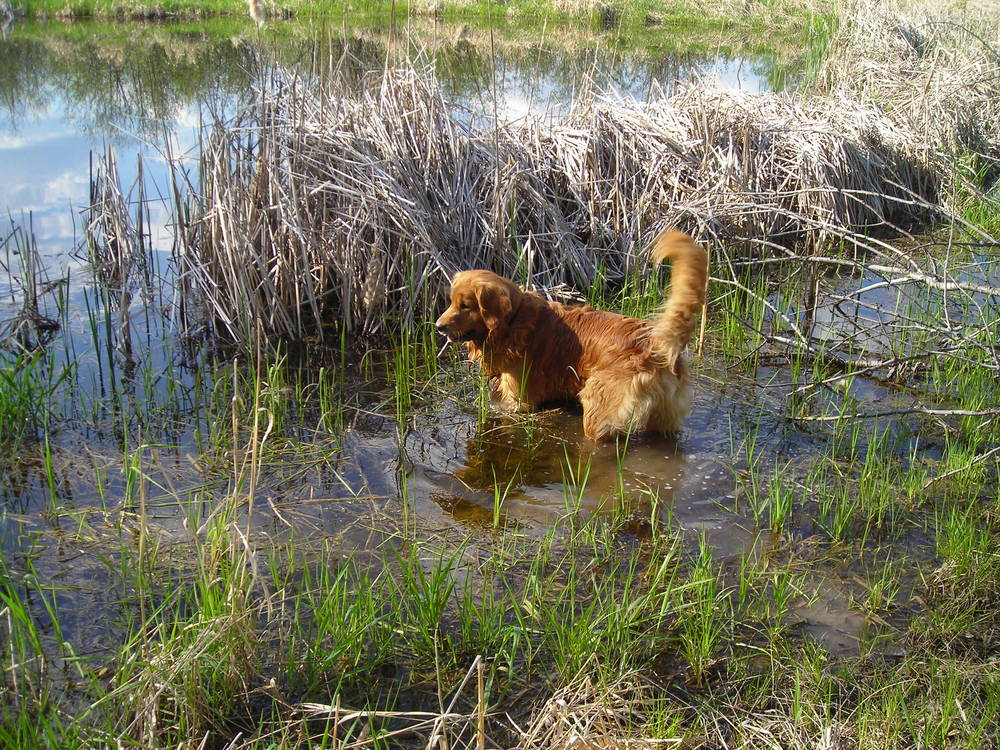 Riley swimming in the pond
