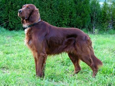 breed image
