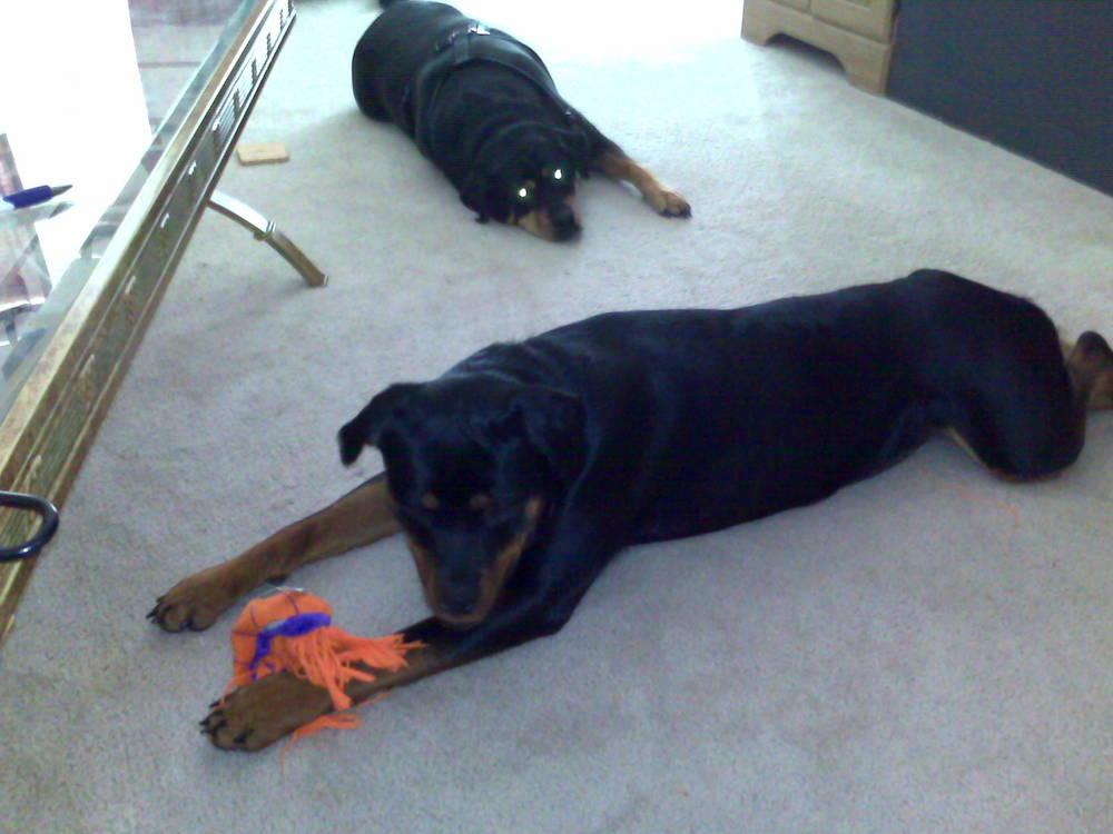 Tiki Looking...Zena Playing