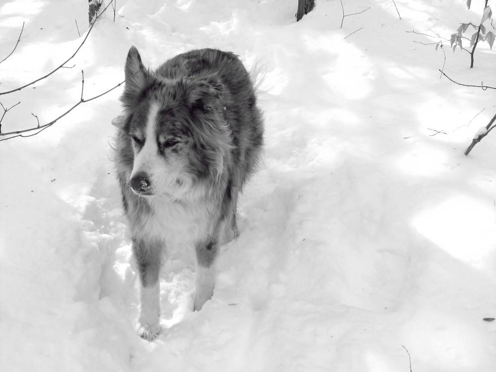 Buddy in the snow