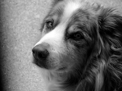 Buddy close up