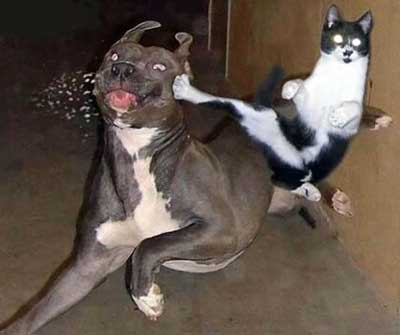 Boxer getting kicked by cat