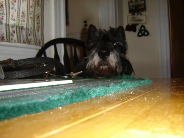 Scottish Terrier with head on table