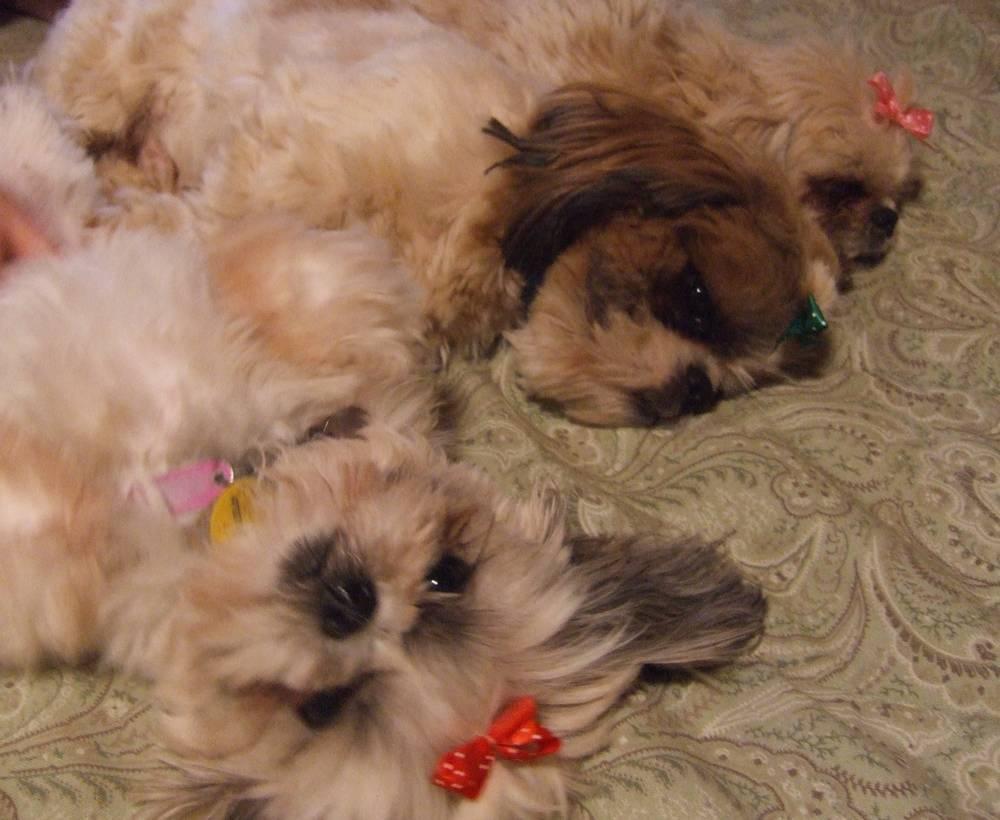 Nikki, Tobe, & Chrissy jo laying around