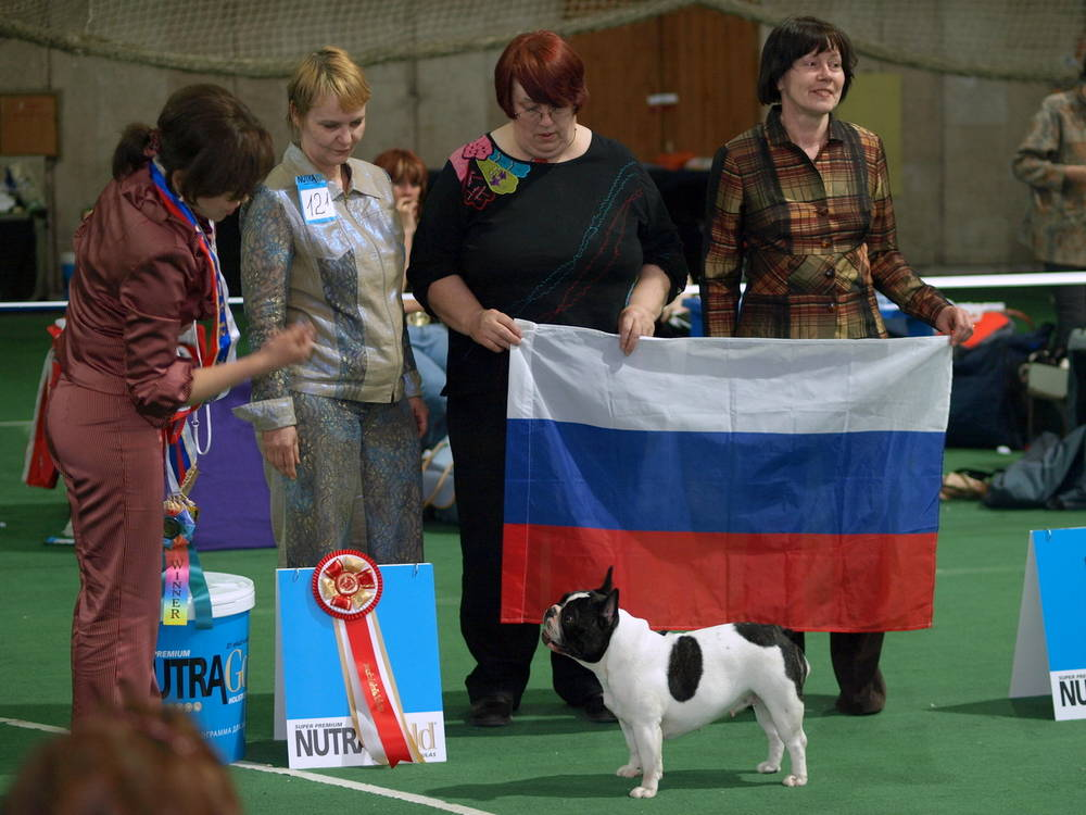 French Bulldog winning for France