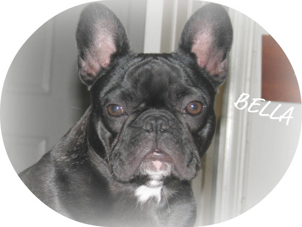 Bella (Tucker's Frenchies)