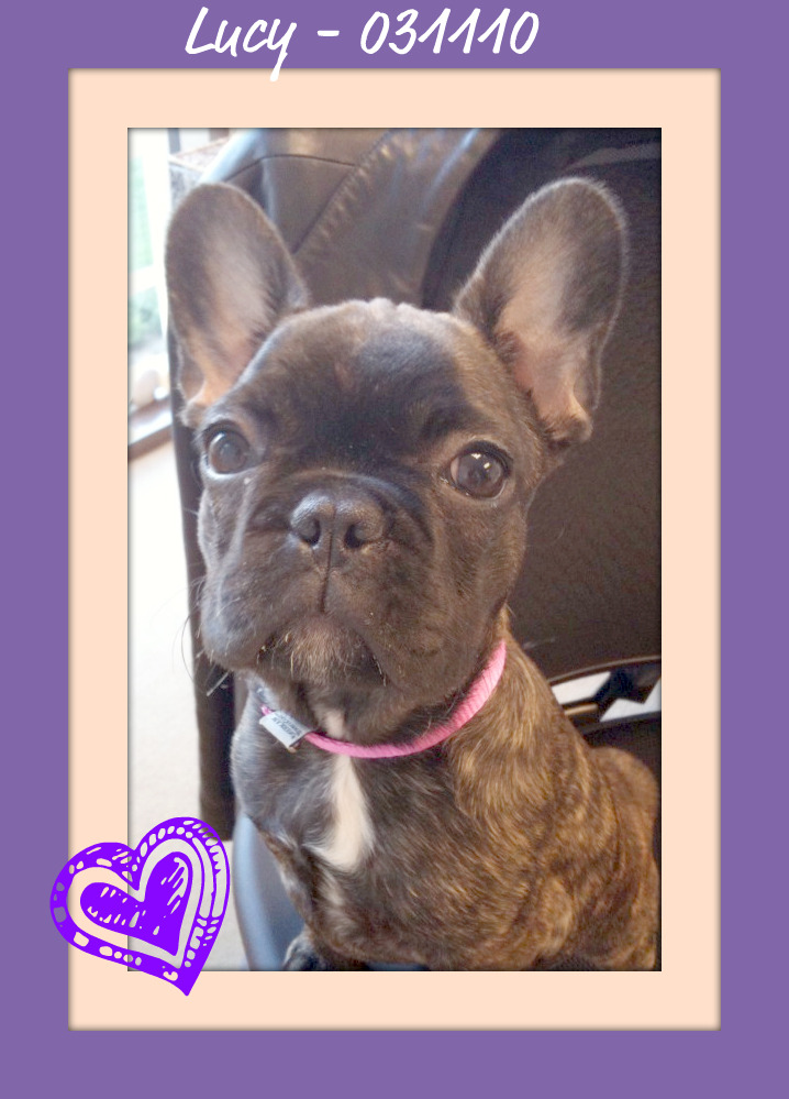 Lucy (Tucker's Frenchies)