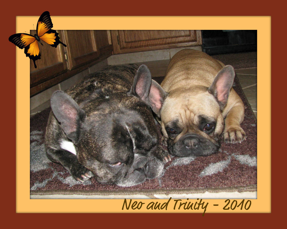 Neo and Trinity (Tucker's Frenchies)