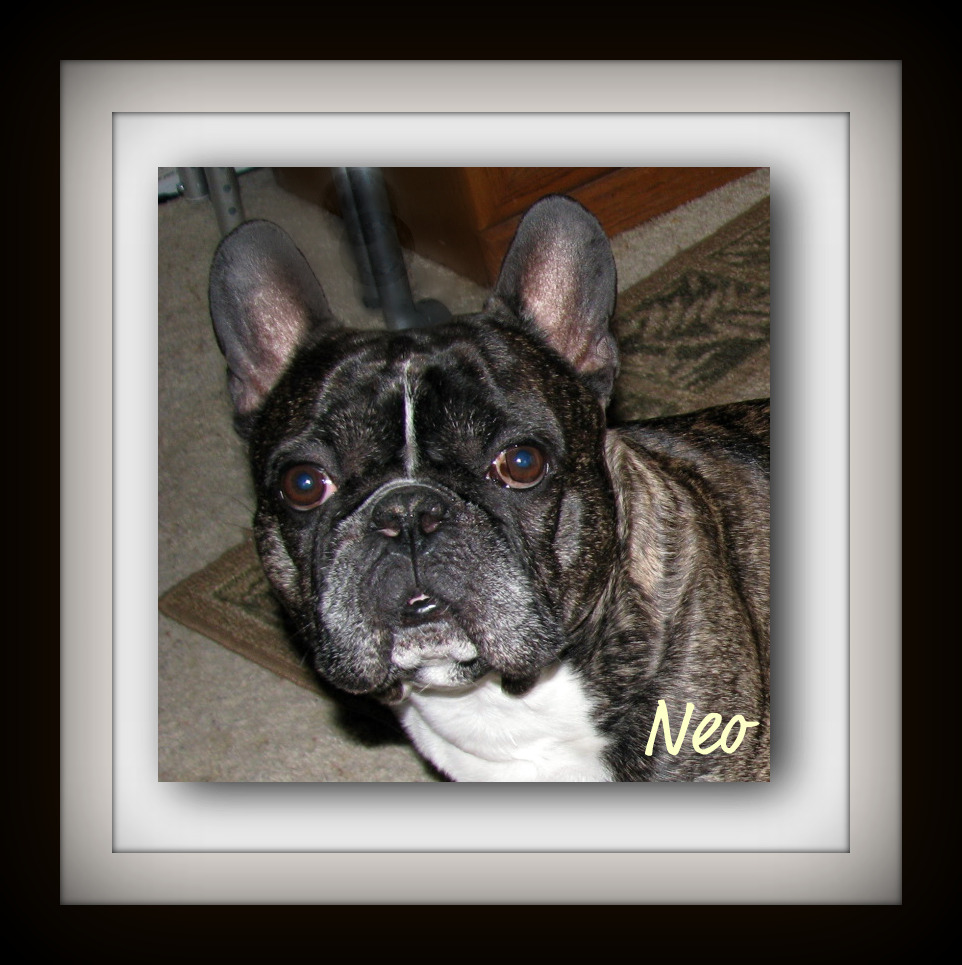 Neo (Tucker's Frenchies)
