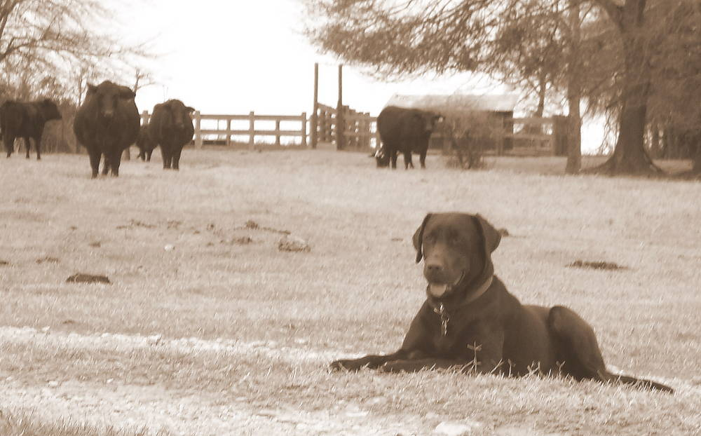 A day on the Ranch!
