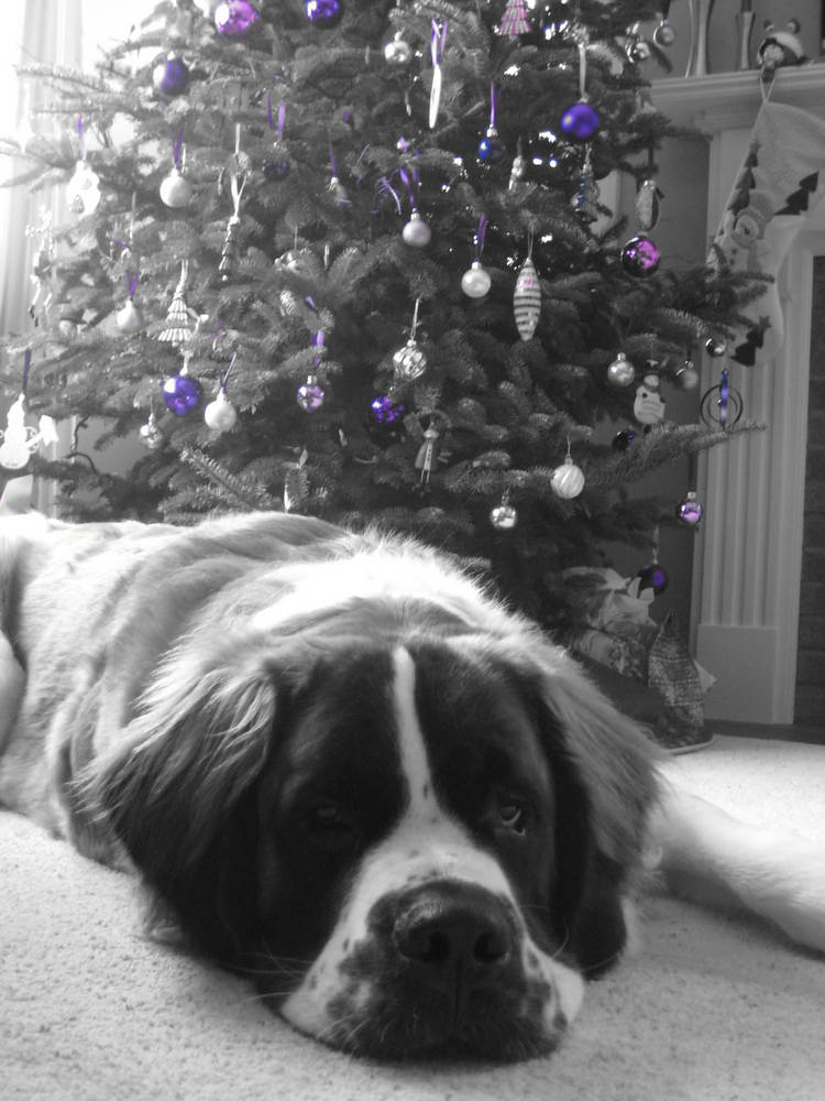 Our big boy Samson