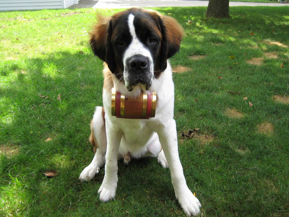 Rescue dog with his whiskey barrel