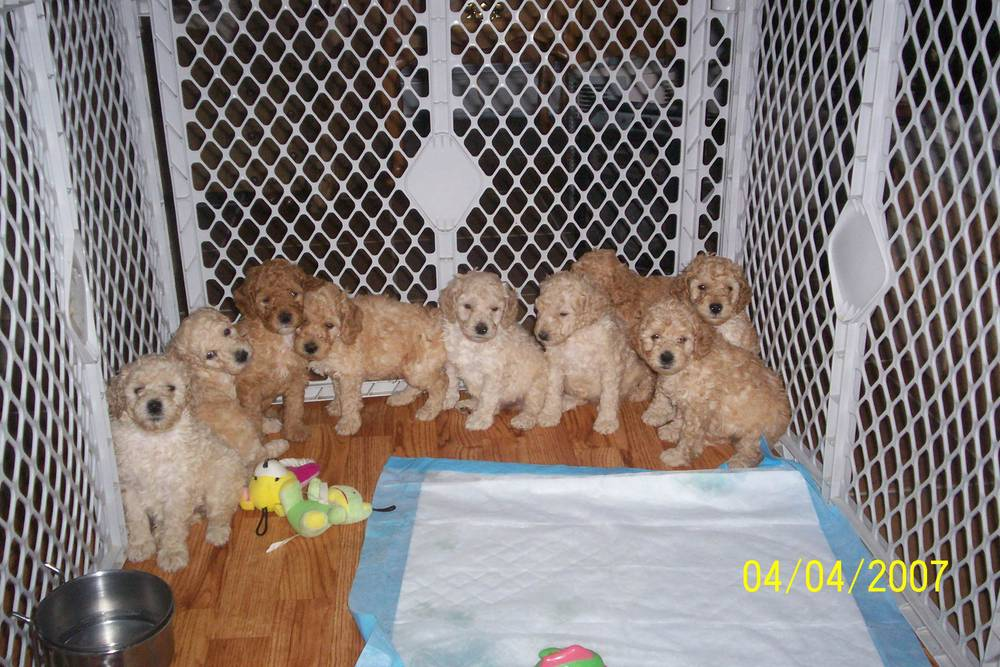 Nine little puppies all in a row