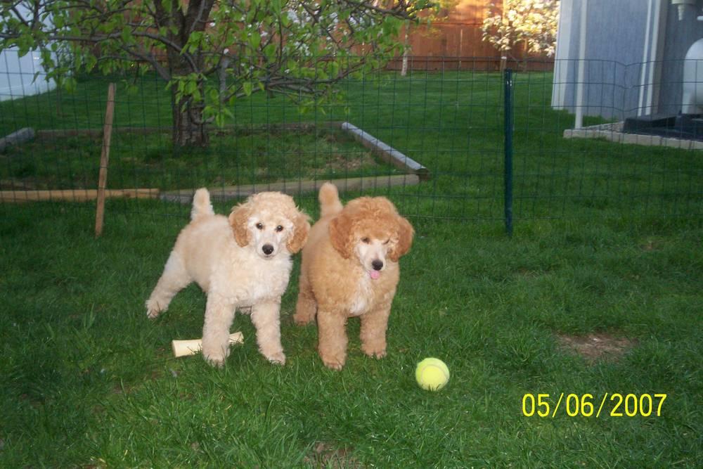 Rusty & Houdini