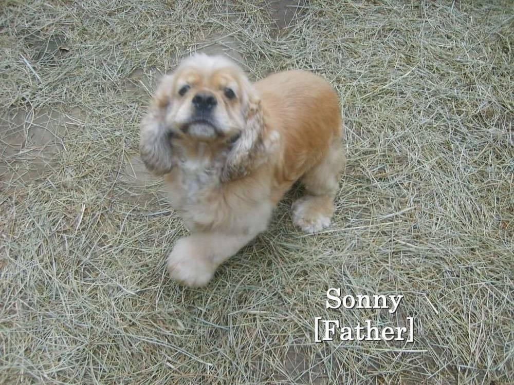 sonny_2_