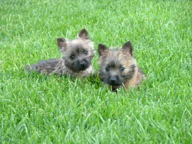 BARNUM & BAILEY 11 WEEKS OLD