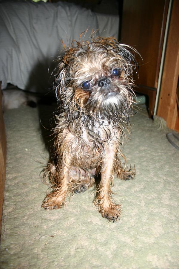 Cleo after Bath