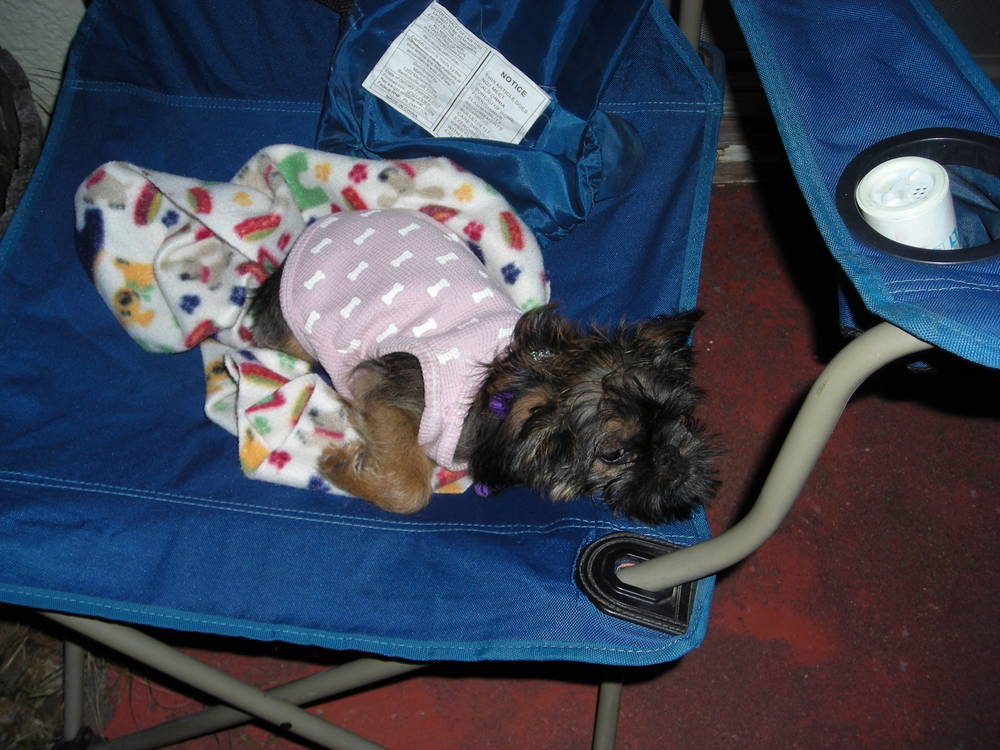 Maybelle's first camping trip