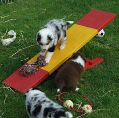 Littermates Play on a Teeter-Totter