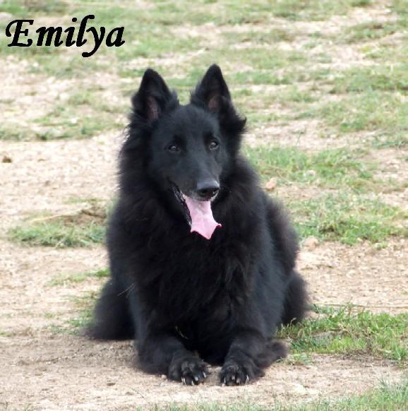Maisy 4 old