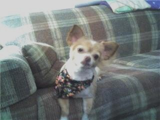 buttercup after her hair cut