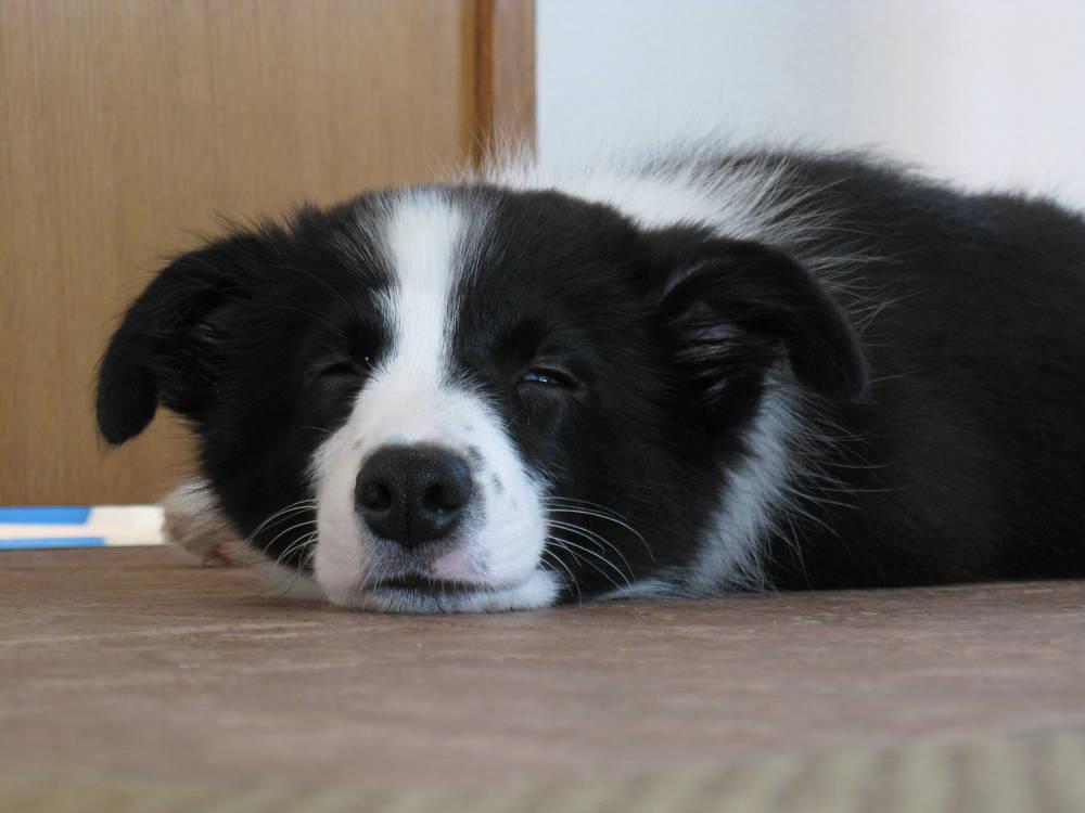 sleepy Charo
