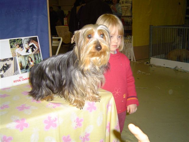 Silky Terrier with child