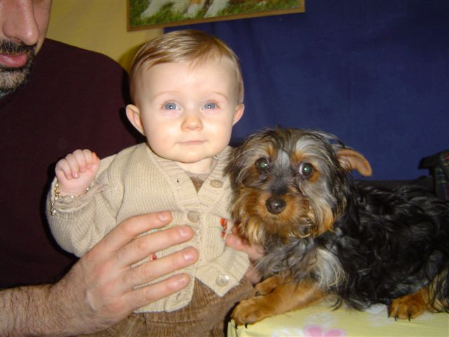 Silky Terrier with baby