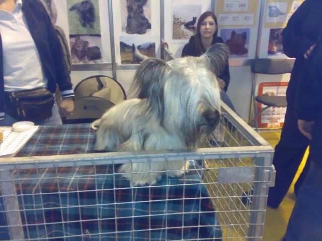 Skye Terrier in bin