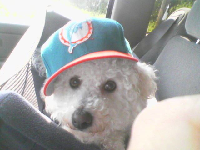 Lacy the Dolphin Fan