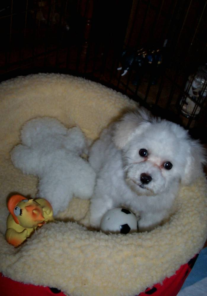 Penny Ann @ 4 months playing in her bed.