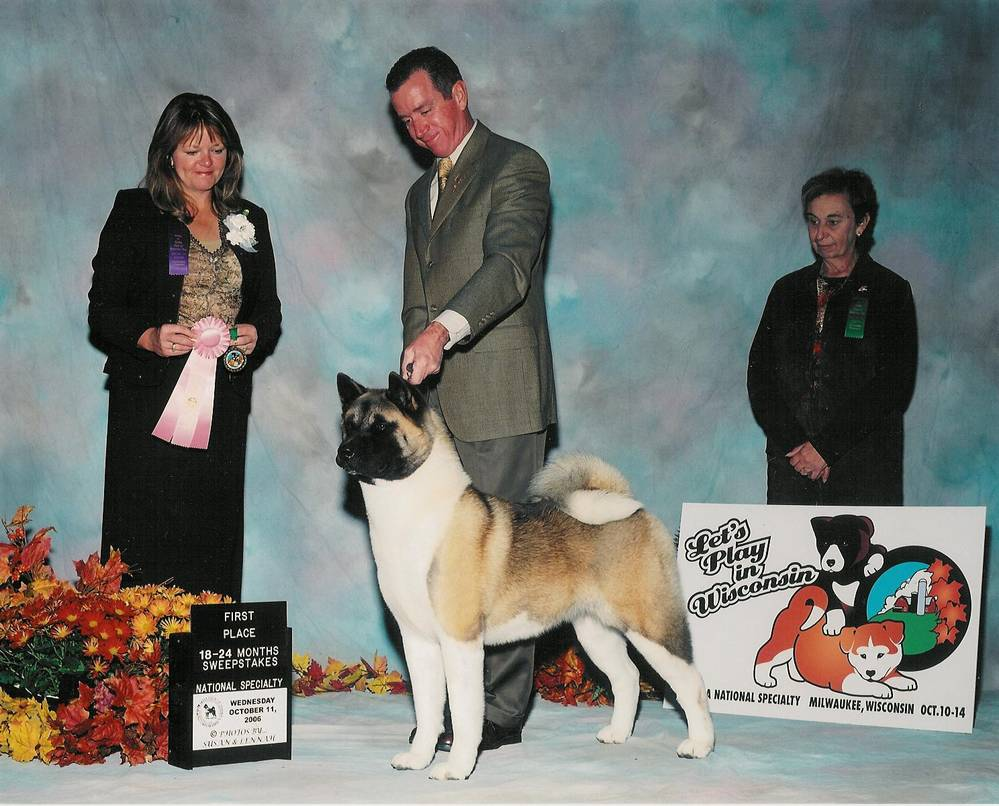 A champion Akita up on stage.